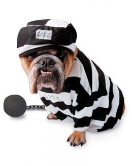 Prisoner Dog