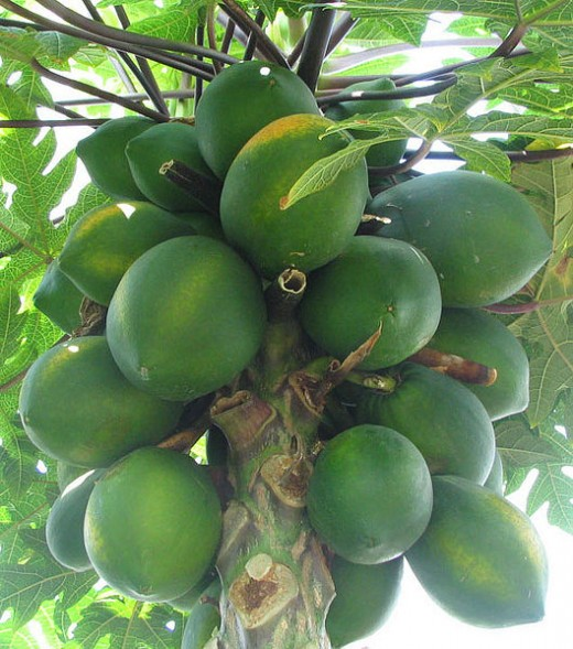 Papaya Fruit. Image Credit, Phyzome is Tim McCormack, Wikimedia Commons.
