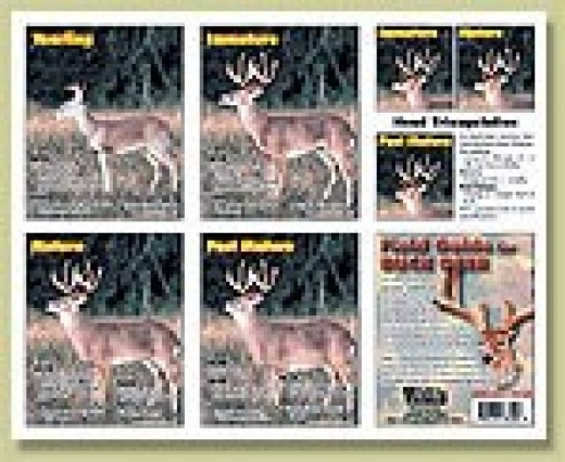 Field Guide for Buck, It's great for display in the blind or the hunting cabin, classroom, wildlife refuge or guide service.