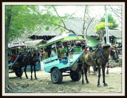 Cidomo, which is the official transportation on Three Gilis.