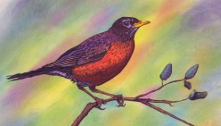 The second bird I did using the Scribble Method. Combines ball point pen on the bird and branch and pastels for the background.