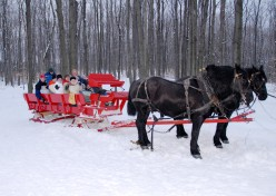 Romantic Valentines Day Idea – A Horse Drawn Sleigh Ride