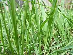 9: grass from Mojeecat Source: flickr.com