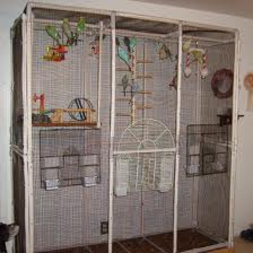 If you have space, this would be the ideal home for one or two pairs of budgies.