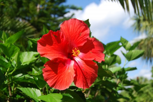 Even the common hibiscus flower is spectacular.