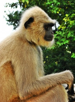 Above: Monkey giving a side pose photograph