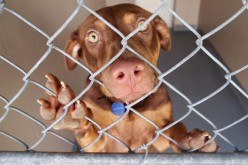 October Is Adopt a Shelter Dog Month! WOOF! WOOF!