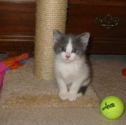 Dixie as a kitten, I had forgotten how TINY she was back then!