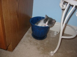 Dixie even climbed into a flower pot one time!