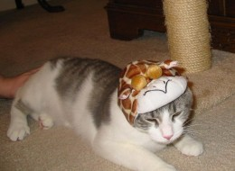 "Misty when she was ""little"" although we think she was almost a year old when we first got her. She sure has grown... Mommy tried to put a ""Giraffe"" hat on, she did NOT approve! The SILLY things we do to pets!"