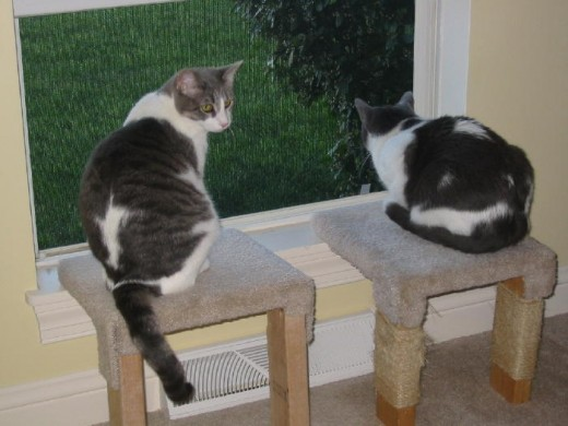 "Both of our ""girls"" sitting on perches enjoying the outdoor view."