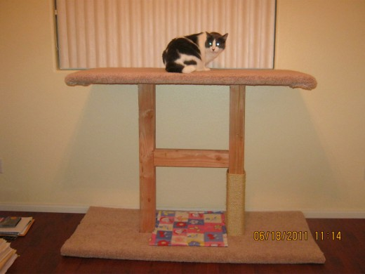 Dixie sitting on the perch my husband made for this home. You don't have to make them this big, he just did because we thought both cats might want to use it at the same time. We put sisal rope on the rest of the posts since this picture was taken.
