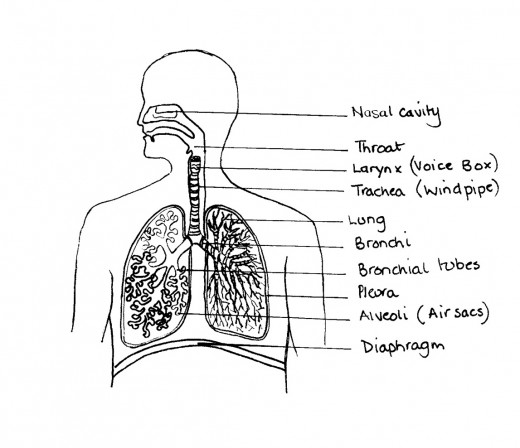 asthma  u0026 its symptoms  including a plan diagram of a