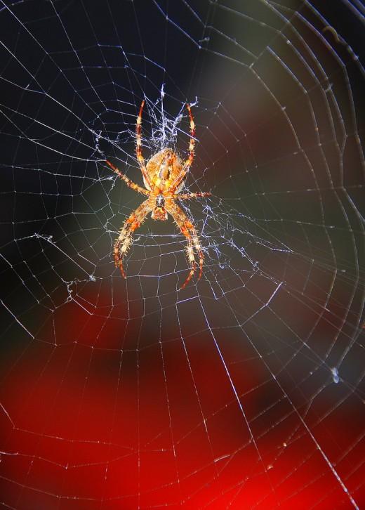 Beautiful spider.