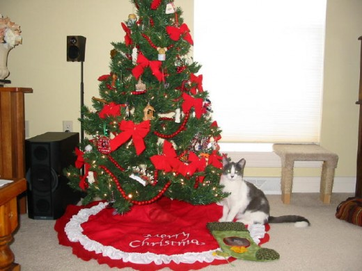 Our kitty, Dixie, sitting beneath the Christmas tree.