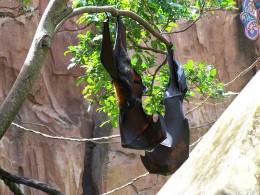 Photo taken at Disney's Animal Kingdom