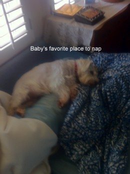 This is Baby's favorite place to take her nap.