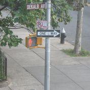The catalpa tree on a Brooklyn street