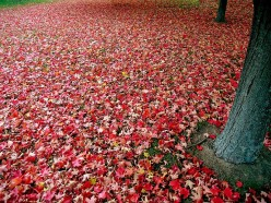 This Is My Autumn