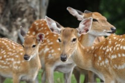 Tell a story about this family of deer.