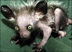 Weird and Strange Animals in the World