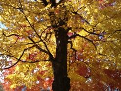 Fun Fall Things To Do near Albany, Saratoga & Glens Falls, NY