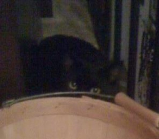 Peeking Kitty