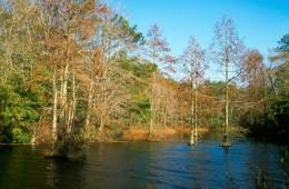 Trap Pond State Park, Delaware.