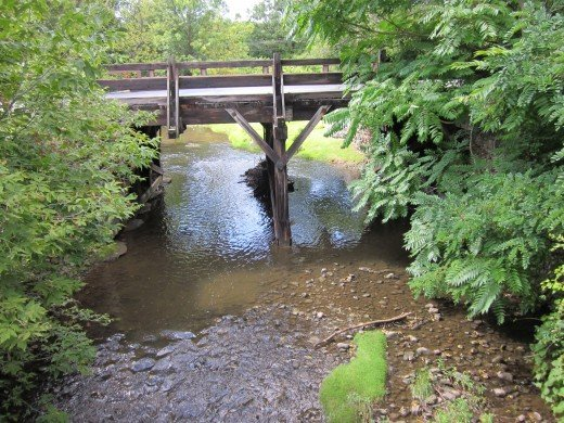 All photos in this hub are from my daily walk, along Allen's Creek, in Rochester, NY.
