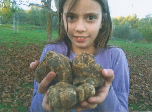 Oct.-Jan.  Mushroom truffle season:  Grows undergroud like a potato and looks like a potato.  A young expert shows off her  harvest..