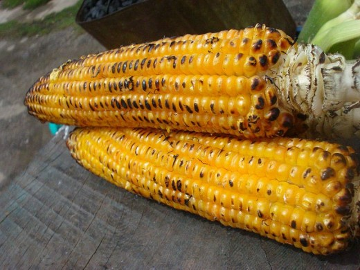 Yellow corn roasted over a fire or grill can be a special fall treat.