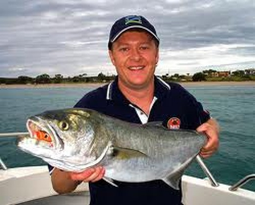 The fishing is great in Kalbarri, it is quite common to catch fish this size and much bigger