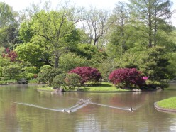 Ponds in Gardens and Parks - A Photo Gallery