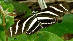 The Life Cycle Of The Butterfly: Photos And Video