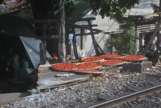 Drying chillies along the railway