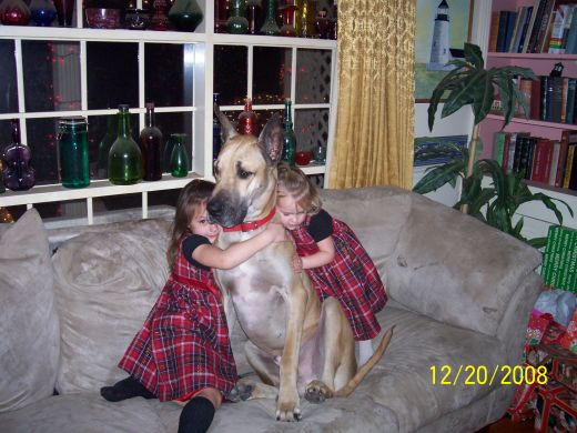 Great Danes and kids - natural companions!
