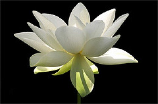 Flower/ White Flower from Bahan Farzad Source: flickr.com