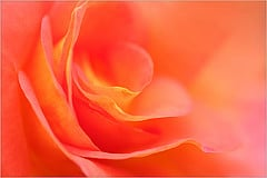 Macro Rose Flower from Bahman Farzad Source: flickr.com