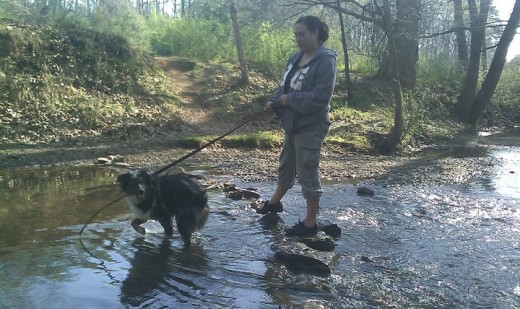 GoGo loves the water. She especially likes when we do long trails that involve crossing little streams like this one.