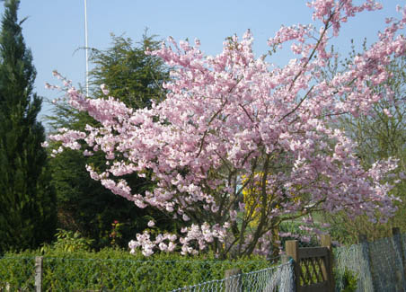 Something always worth a picture or ten; blooming trees!