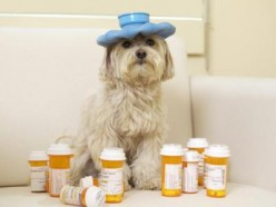 It is possible for lots of human meds to make a dog sick or even worse. Be careful and always consult your vet first.