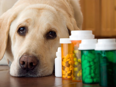 Pepto Bismol  or similar meds are okay for a dogs upset stomach.