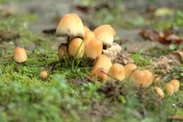 Mushroom Scout Troop 716