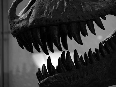 T-Rex Bone Crushing Jaws