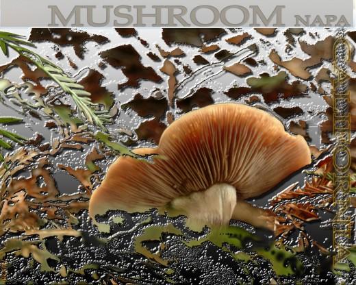 Napa, California Mushroom Poster