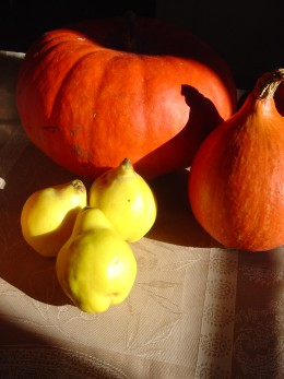 Squashes are easy to grow and great for Halloween