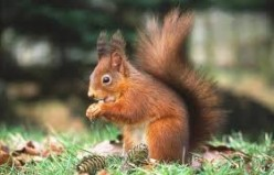 Scraggy Tail Squirrel's Missing Walnuts