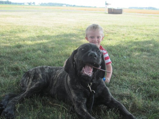 This is Titan with my son.  This picture was taken a while ago, before he went to the vet and weighed 92 pounds.  So, he is obviously much bigger than this!