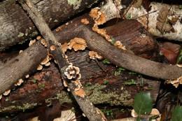 Fungus Highway