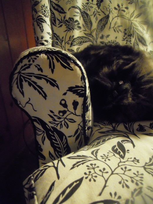 I don't know who enjoys the new chair more: me or my cat. :)